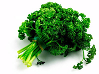 Curley Parsley